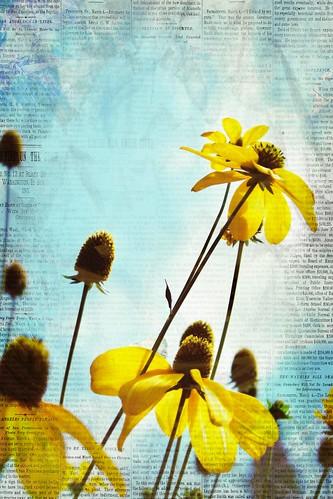 Blooms & News