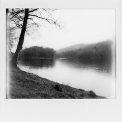 Polaroid - Delaware River img681 (T. Brian Hager) Tags: polaroid polaroidspectra polaroidoriginals instant instantfilm analog bw blackwhite delawareriver trees river water delawarewatergap epsonv600 epson