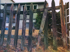 rickety fence (annapolis_rose) Tags: fence picketfence woodenfence fraserstreetneighbourhood delapidated vancouver