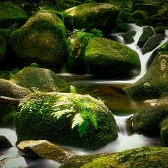 Wasser im Fluss (Jensens PhotoGraphy) Tags: deutschland germany natur nature landschaft landscape langzeitbelichtung wasser water wasserfall grün green steine moos bach badenwürttemberg schwarzwald triberg