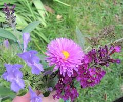 Pihassa enää syksyn blues-sävyt (totinkoti) Tags: kukat ampiaisyrtti syysasteri syyssyrikkä