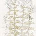 Phlox color sketch by Julie de Graag (1877-1924). Original from the Rijks Museum. Digitally enhanced by rawpixel.