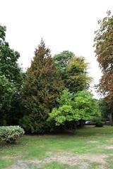 DSC_1685 (PeaTJay) Tags: nikond750 langrishhousehotel hampshire manorhouse hotels gardens outdoors nature flora fauna plants trees bushes lakes grass grasses flowers