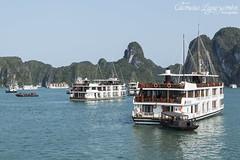 Halong Bay, Vietnam (Tamara L. Leguizamón) Tags: halonbay vietnam agua water ship barcos bay asia sudeste sea bahia