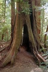 Scan-180919-0003 (alberthuynhphoto) Tags: big basin redwoods redwood state park 35mm fujifilm fuji superia 200 iso film nikon f3