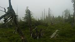 Karkonosze, Poland (trampinthevoid) Tags: mountains mountain poland polska sudety góry june karkonosze dolnośląskie
