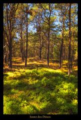 Prerow (Rukiber) Tags: deutschland natur mecklenburgvorpommern dars weststrand wasser meer wald prerow urlaub sunset sonnenuntergang christian kirsch rukiber nikon d750