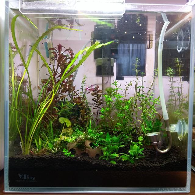 這一缸是我的水草農場保種缸(持續記錄中)