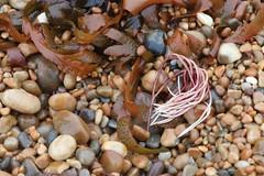 Mermaid's hair extension ? (phileveratt) Tags: seaweed onthebeach beach shingle canon efs18135 eos77d