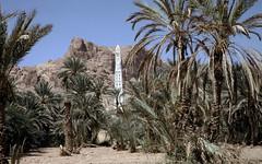 Palm grove with Al-Muhdhar Mosque in the back (motohakone) Tags: jemen yemen arabia arabien dia slide digitalisiert digitized 1992 westasien westernasia ٱلْيَمَن alyaman