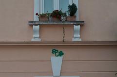 Imitation of life (Cozla) Tags: facade impression art unconscious flowers zadar zara hrvatska croatia urban historicalcentre starigrad