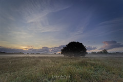 Morning Peace (focus9_photography) Tags: peace tree sunrise misty fog morning clouds heather meadows silence