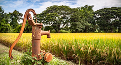 Paddy Field Faucet (PhotoExpozure) Tags: faucet tap water old rusty lever rice paddy field thailand thai golden yellow grass grain trees