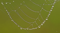 Collier de perles de rosée / Necklace with dew pearls (alainmaire71) Tags: rosée dew spiderweb toiledaraignée perle pearl nature quebec bokeh canada