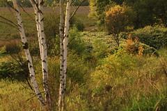 IMG_7268 Near the autumn (MariuszWicik) Tags: forest wood animal tree grass view image landscape polish poland polska canoneos5dmarkii lens