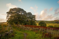September Late Afternoon (vesna1962) Tags: scenery landscape countryside rural path trees fence fireweed grass view sky clouds sunlight sunshine sunset goldenhour haworth stanbury ponden brontëcountry westyorkshire england