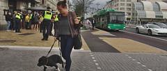 Image (Siaitch) Tags: helsingborg police polis bus dog walk street