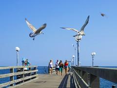 P8090250 2 (diddi.tr) Tags: binz rügen ostsee strandpromenade