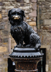Statue of Greyfriars Bobby (p.mathias) Tags: greyfriars bobby statue edinburgh uk unitedkingdom history victorian dog