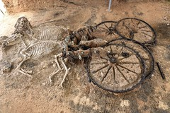 4 Wheel Chariot with Horses in a Tomb, 100 A.D (Jojorei) Tags: chariot kutsche wagen grab tomb indiana jones archelologie suchen grabhuegel grave death tot tod pferde skelet bones knochen skeletton archeology gruft tumulus