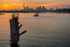 Toronto sunset from Leslie Street Spit (Phil Marion) Tags: philmarion canadian toronto beach public candid woman girl boy teen 裸 asian milf oriental schlampe 나체상 벌거 desnudo chubby nackt nu ヌード nudo 性感的 malibog セクシー 婚禮 hijab philippemarion arab desi indian african chinese ebony latina khỏathân swinger telanjang nubile tattoo fetish erotic feet nude slim plump tranny sex slut nipples ass boobs tits upskirt naked sexy bondage fuck cameltoe cock gay wife crossdress ladyboy panties babe