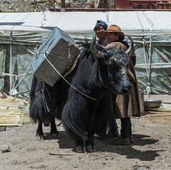D4I_1387 (riccasergio) Tags: china cina tibet alidiqu xizangzizhiqu cn kora kailash