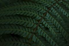 2018-06-23 08.48.56 1 (timct4) Tags: realjardinbotanico jardinbotanicomadrid madrid jardinbotanico botanicalgarden garden jardib green photography photoshop vsco leaves