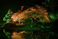 Reflected (K&S-Fotografie) Tags: idyllic lak scenic standingwater scenery tree scenics tranquilscene placid night nachtaufnahme lichtfestival schlos dyck japanischer garten baum gras wald park felsen