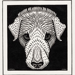Dog's head (1920) by Julie de Graag (1877-1924). Original from the Rijks Museum. Digitally enhanced by rawpixel. thumbnail