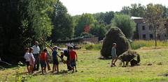iedereen druk bezig (regionaal landschap Schelde-Durme) Tags: waasmunster kinderen pdpo lia natuurbeleving hooiland speelnatuur landschap landbouw biodiversiteit samenwerken
