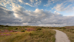 Heather in Texel (Wim Boon Fotografie) Tags: wimboon texel hei nederland netherlands nature waddeneiland canon1740f4l leefilternd09softgrad heather heide