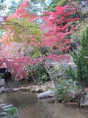 a (49) (hiromi89) Tags: japan beauty beautiful scenery flower wood pond