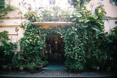 urban jungle (Sunshine Thief) Tags: analog film 35mm lofi vignette lomo eximus uws fujicolor superia melaka streets streetart toycam nature landscape