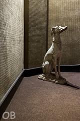 Chien (O. Brosseau) Tags: chien insolite moquette mur statue