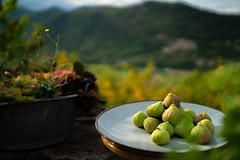Ficus carica (Hunter Gatherer001) Tags: figs bokeh ardeche