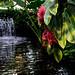 Como Conservatory 8/18/18 #comozoo #mysaintpaul #fountain #pool