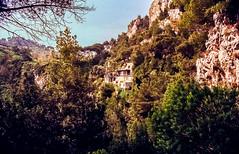 90-03 pan fels capri nest  steil ag30-137 (ulrich kracke (many thanks for more than 1 Mill vi) Tags: i baumkrone capri nah neapel nest panorama steilküste