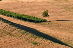 ombre lunghe (luporosso) Tags: natura nature naturaleza naturalmente nikon nikond500 nikonitalia scorcio scorci country countryside albero tree ombra shadow marche italia italy