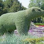 DSC02179 - Polar Bear thumbnail