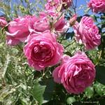 68_P6030083 thumbnail