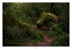 Hidden Path (Max Angelsburger) Tags: rock path felsenmeer würm pforzheim hagenschies nordschwarzwald felsen buntsandstein wood forest wald green light deep mystic bergpfad iceage leftovers wilderness