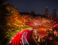 Fast and Furious in the fall in Tokyo (Stuck in Customs) Tags: tokyo japan treyratcliff stuckincustoms stuckincustomscom travel road lights long exposure longexposure car trails red trees autumn fall night city cityscape