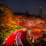 Fast and Furious in the fall in Tokyo thumbnail