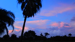 Electric Blue Sunset (Jim Mullhaupt) Tags: sunset sundown dusk sun evening endofday sky clouds color red gold orange pink yellow blue tree palm outdoor silhouette weather tropical exotic wallpaper landscape nikon coolpix p900 jimmullhaupt manateecounty bradenton florida cloudsstormssunsetssunrises photo flickr geographic picture pictures camera snapshot photography nikoncoolpixp900 nikonp900 coolpixp900