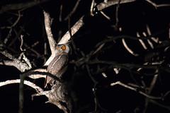 petite rencontre... (mille_emmanuel) Tags: nature afriquedusud afrique canon nice nuit