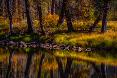 Merced Riverbank Reflection (Jeffrey Sullivan) Tags: yosemite nationalpark fall colors photography workshop landscape travel california usa nature canon eos 6d photo copyright november 2017 jeff sullivan unitedstates sierranevada national park united states merced river reflection hdr photomatix