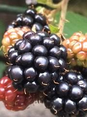 "Macro Mondays - ""Defining Beauty"" (hp349) Tags: flora fruit berry mm hmm ""definingbeauty"" ""macromondays"" mondays monday macro"