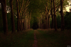 Night is coming (Vak Photos) Tags: forest woods path trees tree lined nature night sunset dark scenery