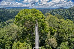 Ancient Woods (DjemoGraphic) Tags: rainforest borneo trees canopy temburong brunei uluulutemburong nationalpark tropical asia kingdomofunexpectedtreasures jungle