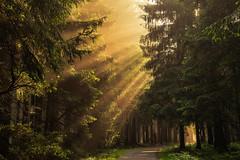 forest series #79 (Stefan A. Schmidt) Tags: meschede nordrheinwestfalen deutschland de pentaxart forest sunbeam golden